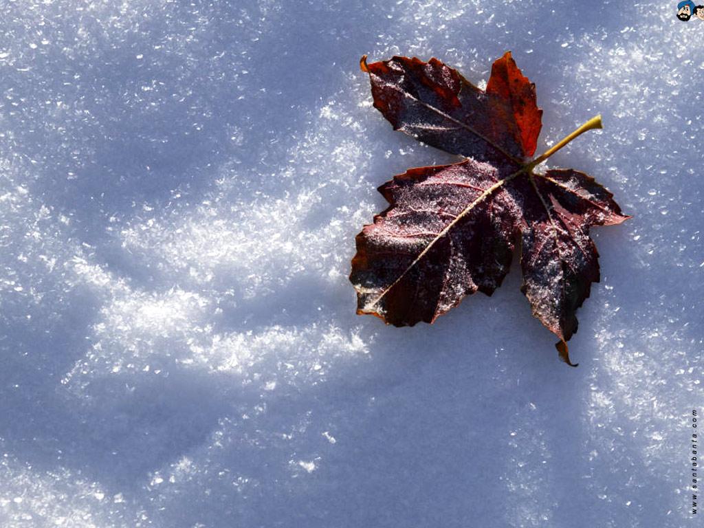 Basik ru природа а ведь скоро зима