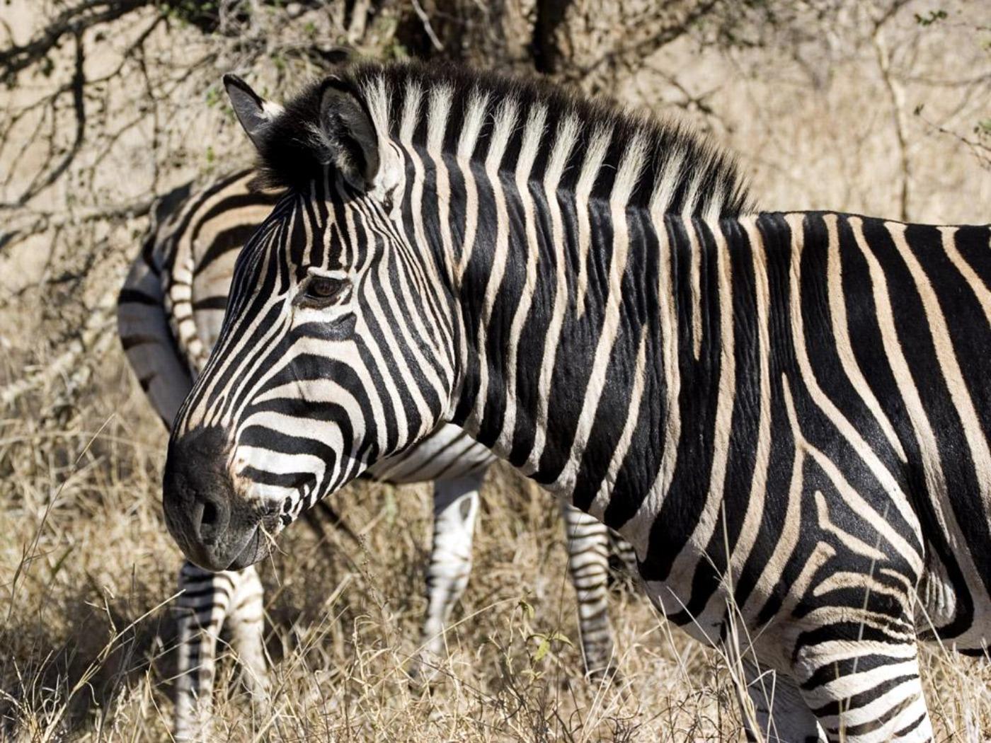 легенда прикольные фотообои зебры для мобилки хорошо заявиться летом